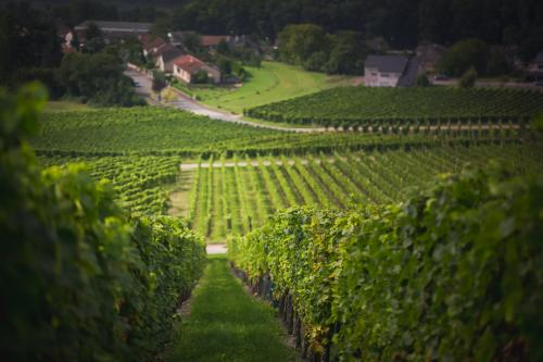 Saarland-the winefields of Smith and Weber where people can get wine of their own piece of land-CasparDiederik-9869 DZT